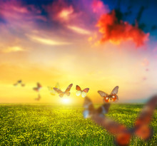 Colorful Butterflies Flying Ov...