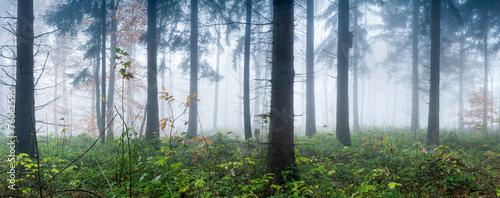 Düsterer Wald #76062596