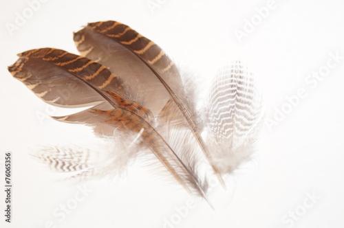 Fényképezés  Plumage woodcock 1