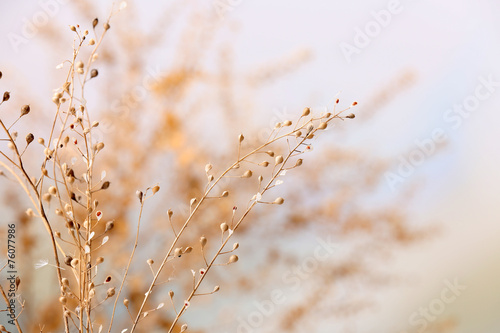 Dried wildflowers on light background - 76077986