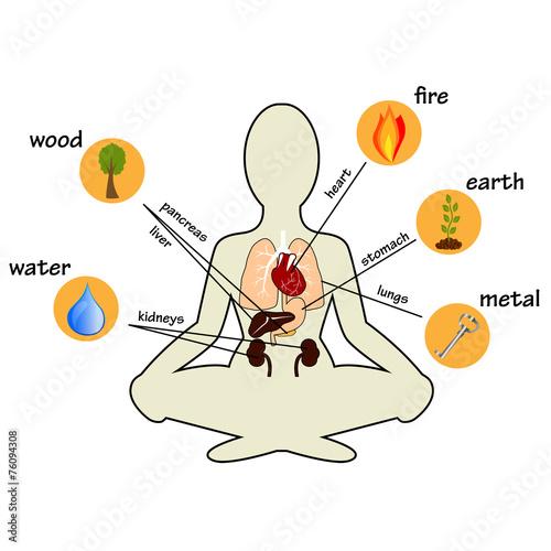 Fotografía  Five elements and human organs