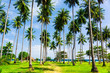 Jungle Landscape Exotic Paradise