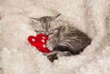 Nice Sleeping Kitten And Heart