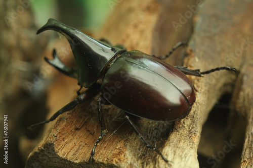 Beetle on wood Poster