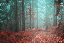 Forest Fairytale Road