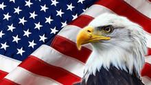 North American Bald Eagle On American Flag