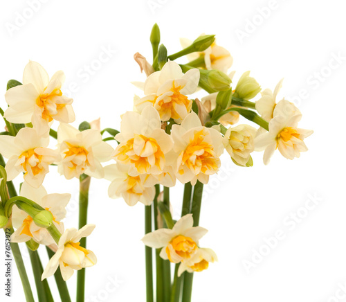 Papiers peints Narcisse double mini-narcissi isolated