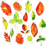 set of autumn and summer leaves in watercolor