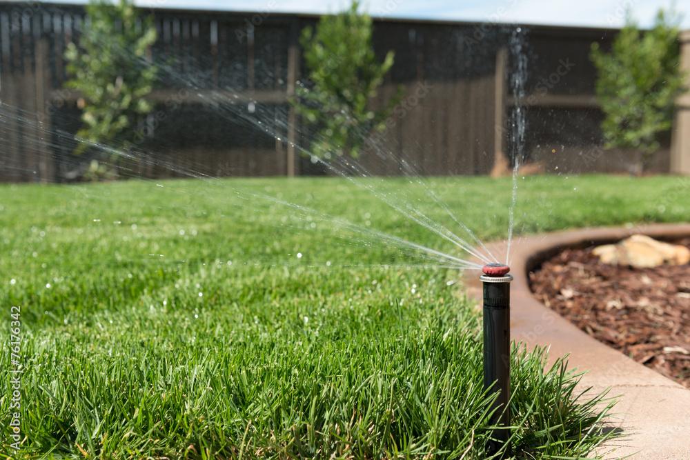 Fototapety, obrazy: Lawn Sprinkler Spraying Water on Grass