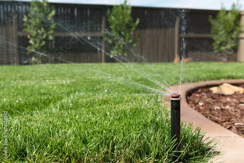 Obraz Lawn Sprinkler Spraying Water on Grass - fototapety do salonu