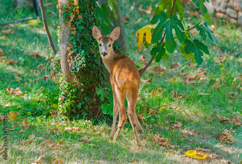 Deer in the garden. плакат