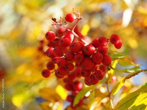 Recess Fitting Vineyard rowan autumn