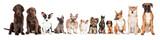 Fototapeta Dogs - group of dogs