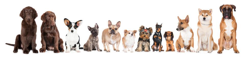 Fototapeta group of dogs