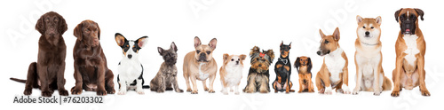 Poster Hond group of dogs
