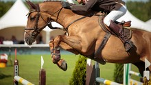 Equestrian Sports, Show Jumping Event, Horse Jumping Competition.