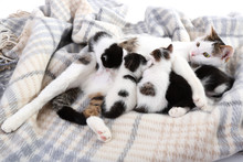 Cute Mother Cat And Little Kittens