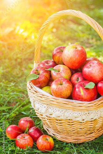 Fruits Organic apples in basket in summer grass. Fresh apples in nature