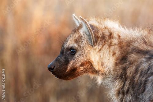Staande foto Hyena Hyena cub portrait