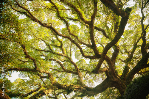Ancient banyan canopy Canvas Print