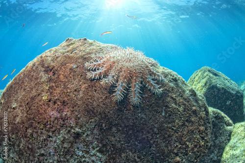 sea stars in a reef colorfu...