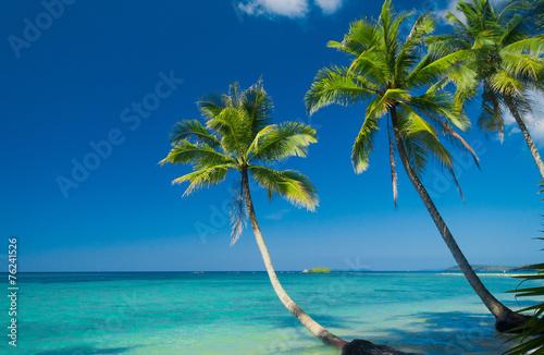Poster Tropical beach Palm Panorama Green Getaway