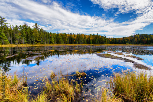 Photo Stands Water lilies Autumn Forest Surrounding a Pond