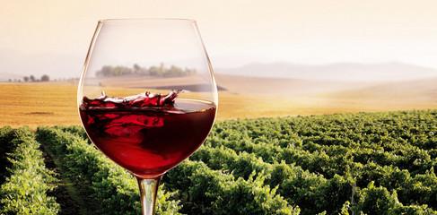 Panel SzklanyBicchiere di Vino rosso in Vigneto