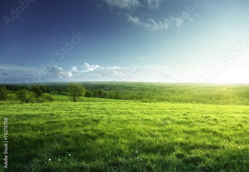 Foto auf Gartenposter Landschappen field of spring grass and forest