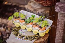 Herbs In Egg Box In Spring Garden