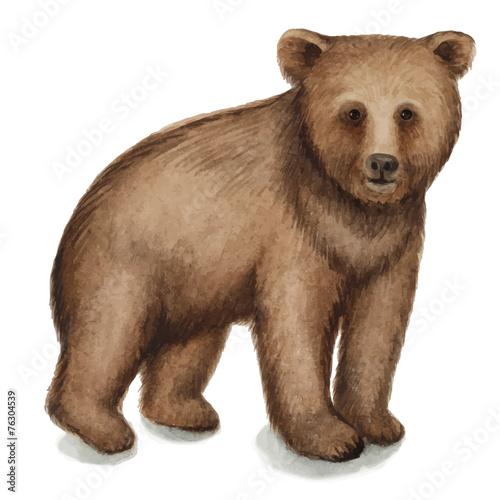 Foto op Plexiglas Leeuw Brown bear
