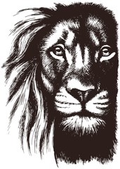 Fototapeta Lion head vector