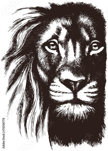 Photo sur Toile Croquis dessinés à la main des animaux Lion head vector