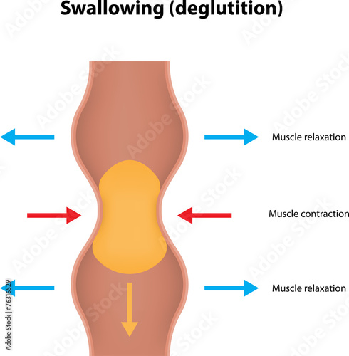 Photo Swallowing (deglutition)