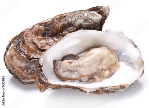 Raw oyster on a whte background. Wallpaper Mural