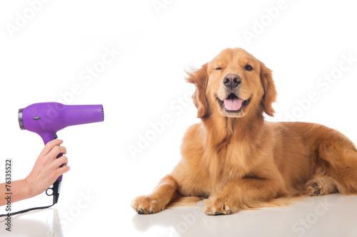 Fotografía  Grooming Dog