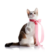 The Kitten With A Pink Tape Sits On A White Background.
