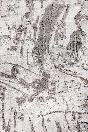 Poster Vieux mur texturé sale Verwachsene Schnitzereien in einem Palmenstamm