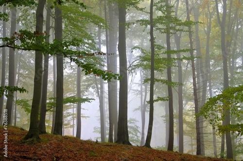 las-bukowy-we-mgle-11
