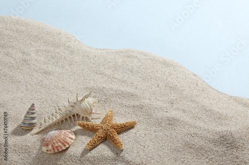 Obraz na plátně  Starfish & Shells