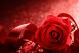 Walentynkowa róża na czerwonym tle