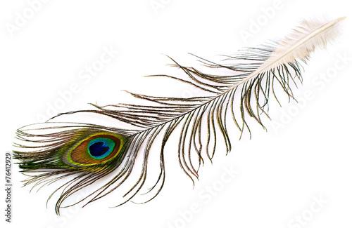 Fotoposter Pauw peacock plume