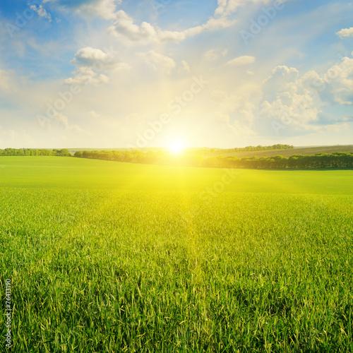 Fotobehang Cultuur field, sunrise and blue sky