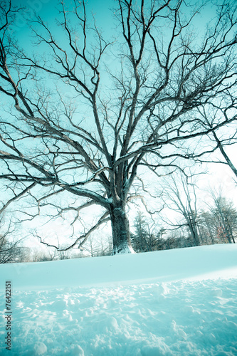 Bare tree in winter with snow