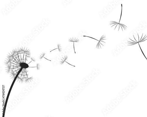 Dandelion seeds silhouette