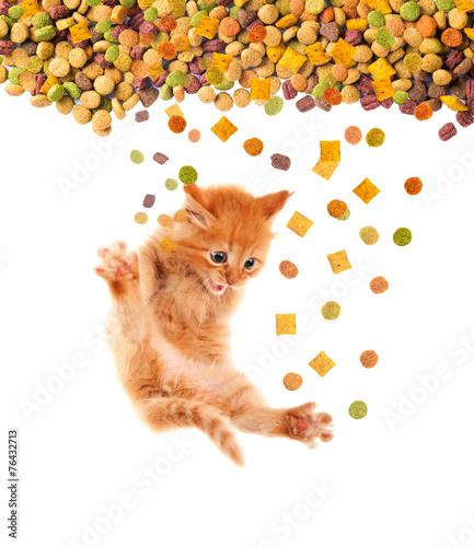 maly-kotek-proszacy-o-sucha-karme