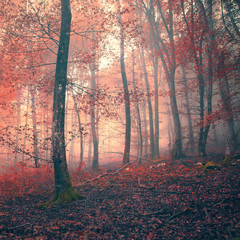 Fototapeta Vintage Red color fantasy light forest