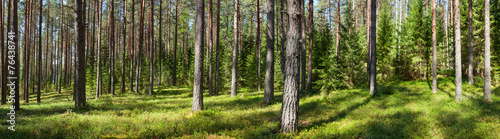 Aluminium Prints Panorama Photos Summer forest panorama