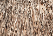 Roof Made Of Palm Leaves, Background Texture