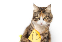 Beautiful Kitten And Yellow Post-it With Drawn Heart